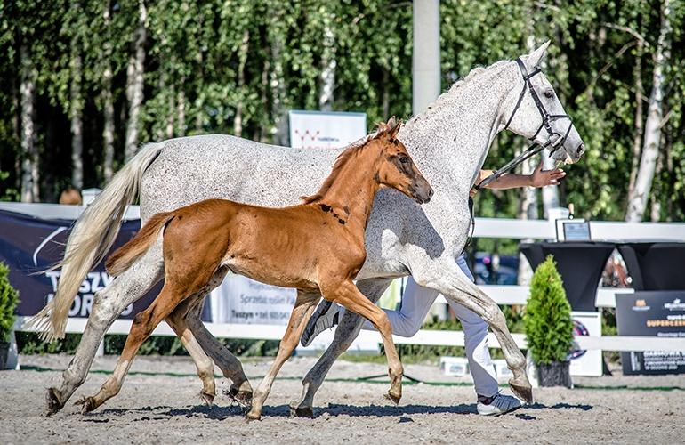 tyszko_cichon_tyszko-horses_cichon-stallions