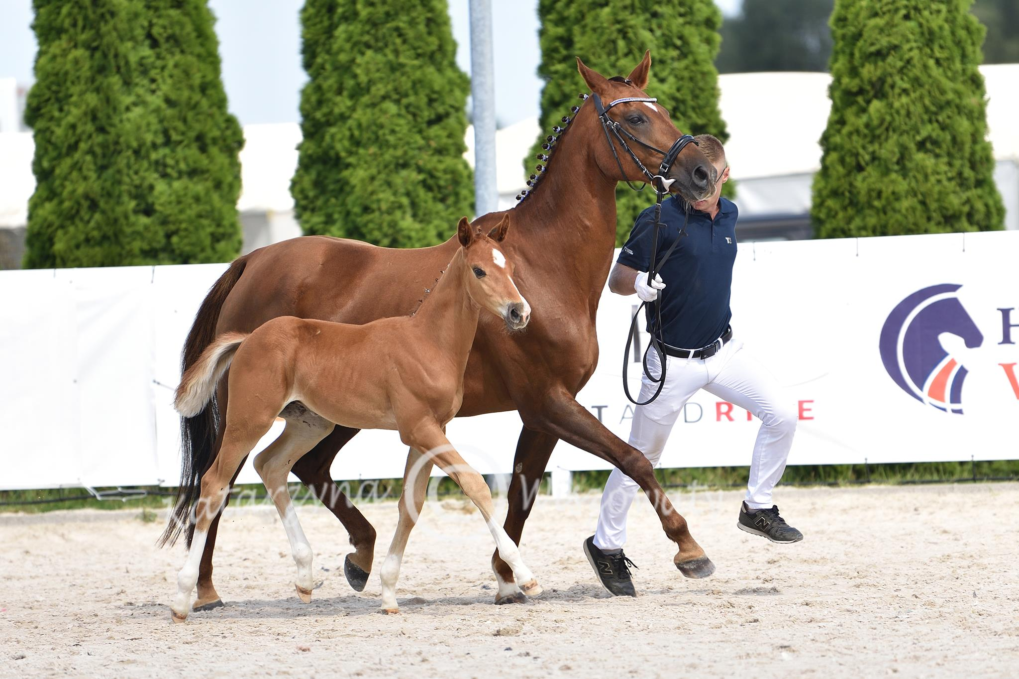 Daddy Cool old (Don Deluxe x Iland) (Copy)